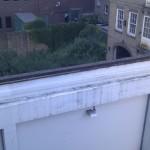 Katze auf schmaler Mauer in ca. 4 Meter Höhe