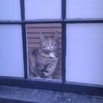 Getigerte Katze im Fenster eines Stadthauses beim Spital Field Market