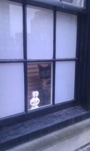 Melierte Katze im Fenster eines Stadthauses beim Spital Field Market
